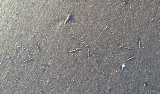 Circles in the Sand 024